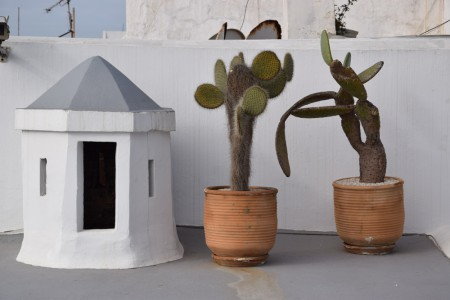 Cactus sur la terrasse du riad Azahra à Rabat